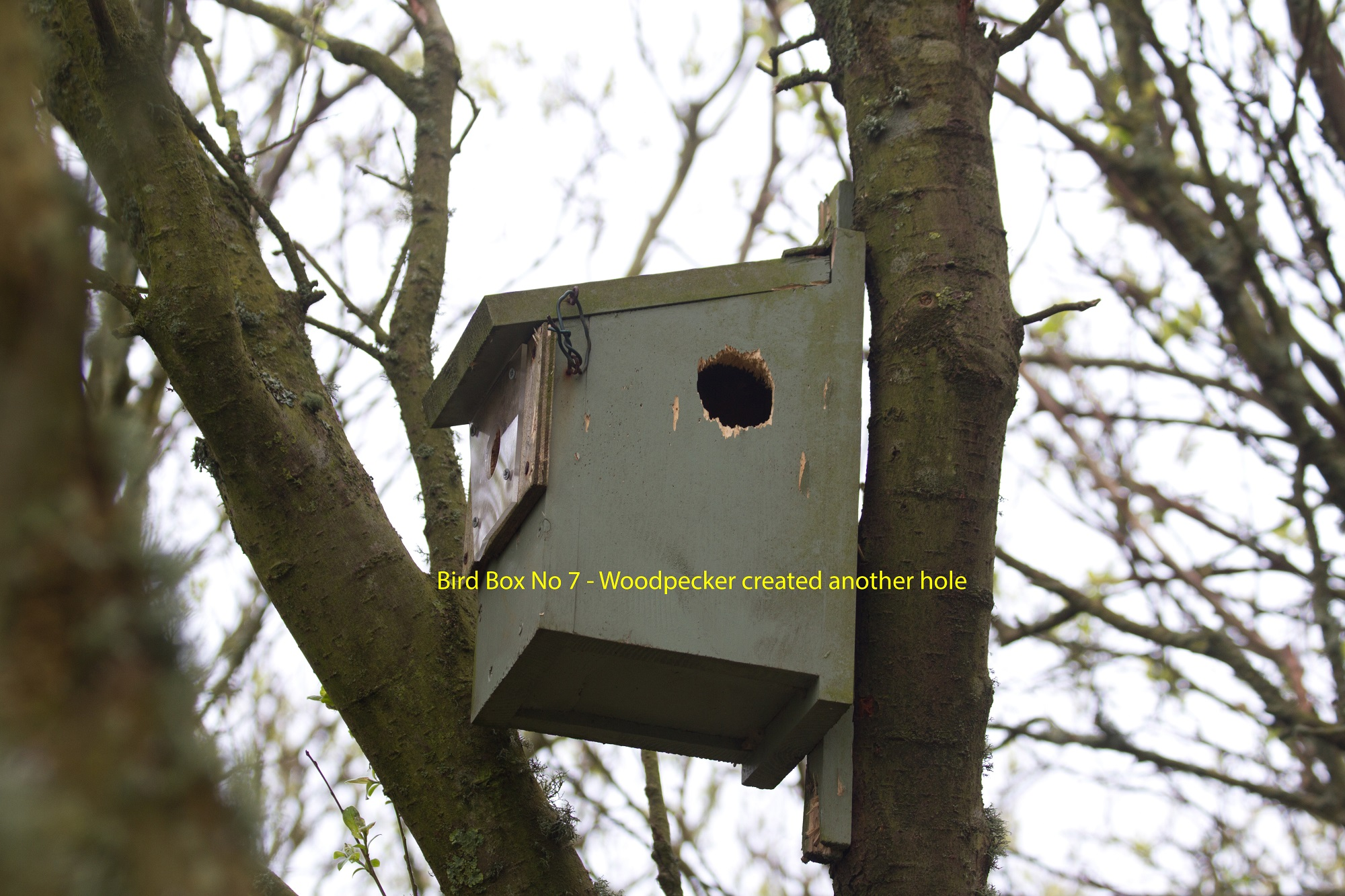 002-bird-box-no-7-with-hole-made-by-woodpecker-1-1-d5ab2f4a59d7eee322b2bdcc26c8e5f8e807c538