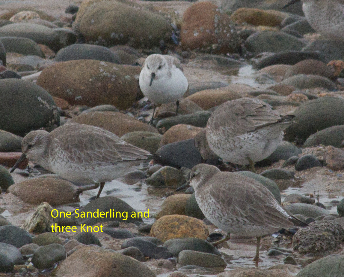 037-knot-and-sanderling-1-1-1498f072be4d7768090438abe00454dffd1a021d