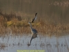 007young-heron-and-cormorant-1-1-6db624b18adb208109d9d669d7973b4aad9be15b