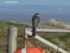 sparrow-hawk-2-a04f8f43554db7753c1fac13b1d066789b2d2861