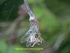 spiderr-with-dragonfly-4-223e9e8f455f6c483dda68c12668ff9d57591dab
