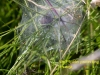 024-wolf-spider-and-egg-cocoon-1-2-bdfa10beee44d5dd306d67d6fd35448decf408ba