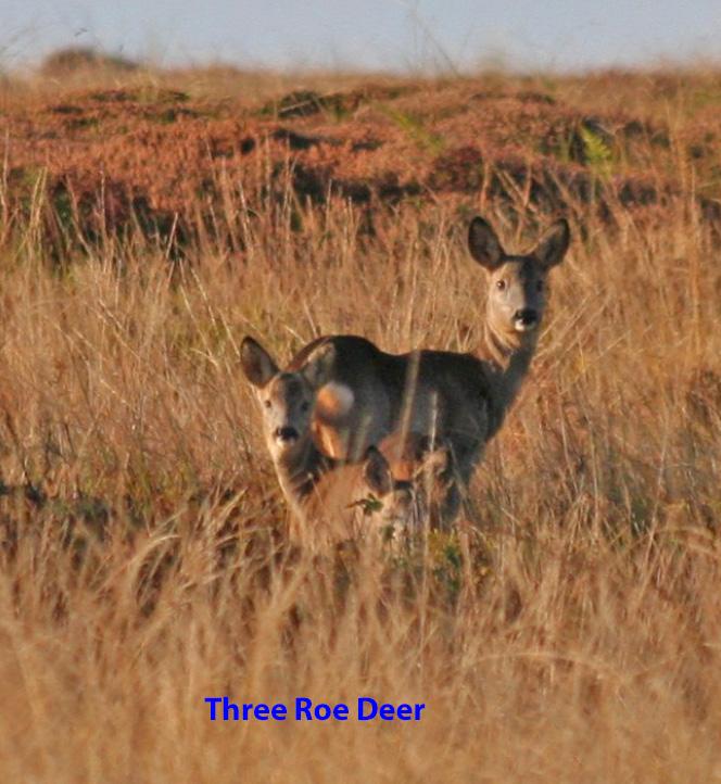 three-deer-3-1-0e26b3e0f38127af593178a842530ff91f0b5270
