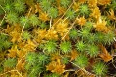 Mosses-Ferns-Lichens-Grasses