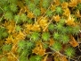 Mosses-Ferns-Lichens-Grasses