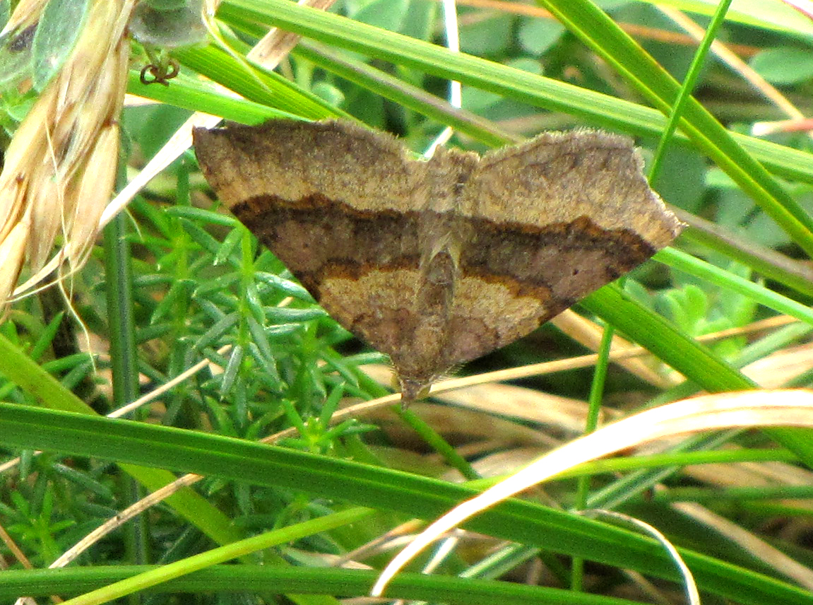 shaded-broad-bar-walney