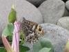 grayling-walney