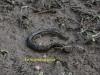 005-eel-in-dried-up-field-pond-1-1-ce0a0c830f5e7e6dc82402836561fd149659790f