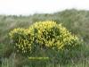 wild-lupin-june-2010-1-04edd3b240c0d4eb86853638c354e184d0fe15ba