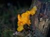 016-fungus-on-gorse-stump-1-1-bd6d8326a0c4d330e5881390a0ed5e8d550d3b8d