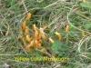 p1010047-yellow-coral-mushroom-1-1-6ec36e0417d6b05c8f8563f8d9d33d6cc0006a67